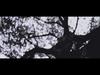 Circa Survive - Imaginary Enemy