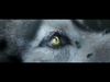 David Guetta - She Wolf (Falling to Pieces) (Explicit)