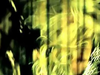 Paola - Gine Mazi Mou Ena | Clip Hd