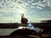 Istanbul City - Seagull Sadness