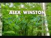 Alex Winston - The Day I Died