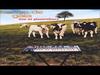 Banco de Gaia - 887 (Live at Glastonbury)