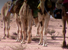 Logical Drift - Judean Desert
