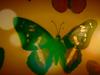 Annie Lennox - Hesperiidae